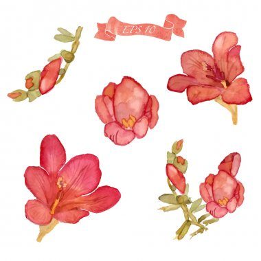 Set of watercolor floral elements.
