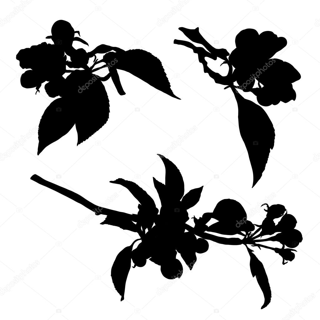 Collection of blossom aplle flowers silhouette. Vector isolated illustration.