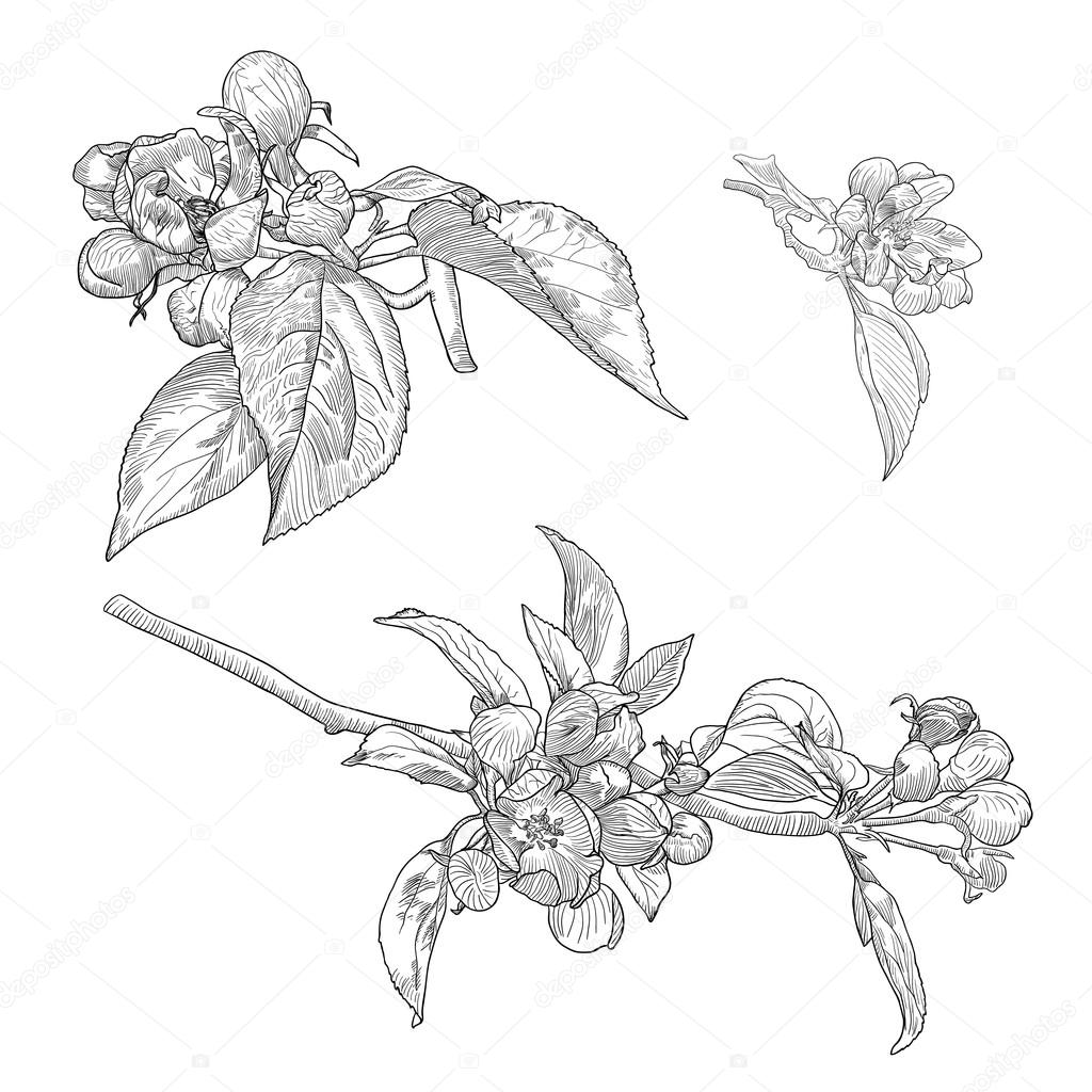Vintage Collection of Vector Hand Drawn Blooming Apple Tree Twigs