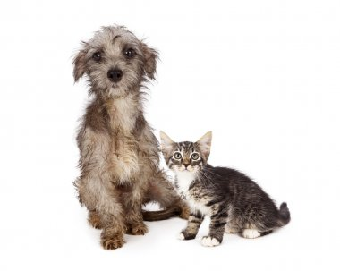kitten and puppy with dirty fur