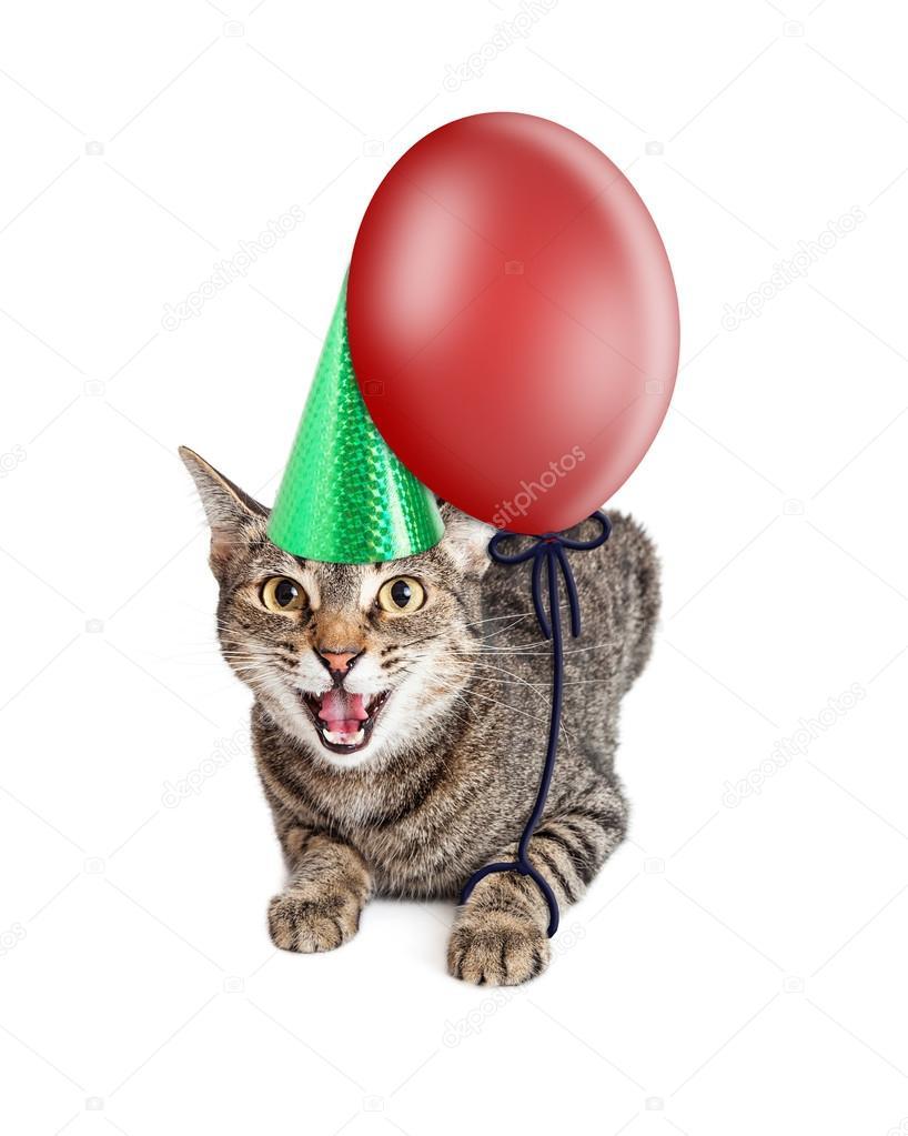 Verruckt Geburtstag Katze Stockfoto C Adogslifephoto 107816090