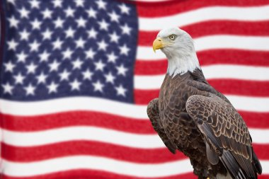 American Bald Eagle and Waving Flag