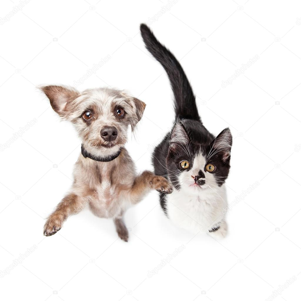 Собака и котенок вместе — Стоковое фото © adogslifephoto ...