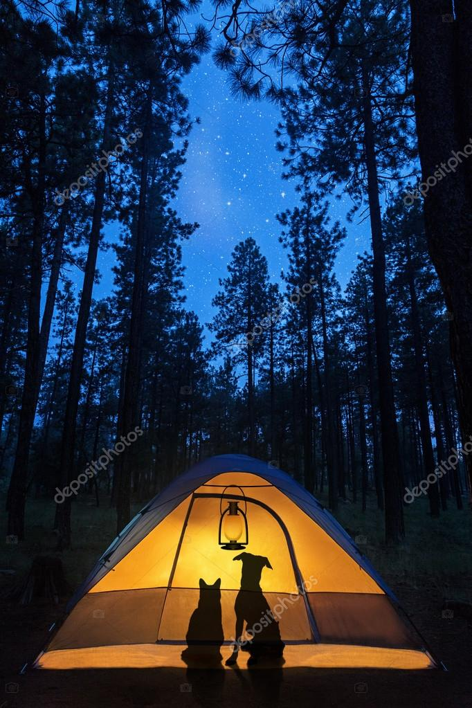cat and dog in a camping tent