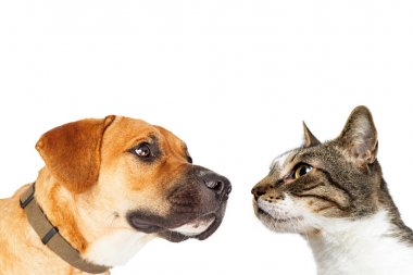 Cat and Dog Facing Each Other