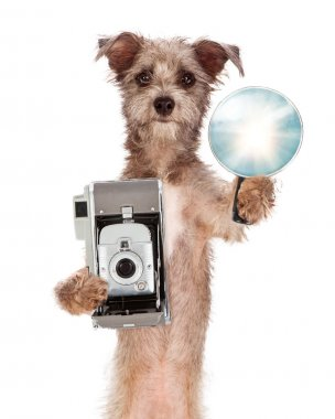Terrier Dog With Vintage Camera and Flash