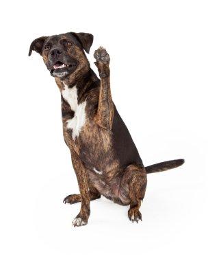 Large Brindle Dog Raising Paw