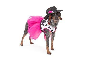 Festive Cowgirl Australian Cattle Dog Standing