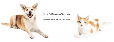 Yellow Dog Cat Cover Photo