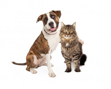 Dog Arm Around Tabby Cat