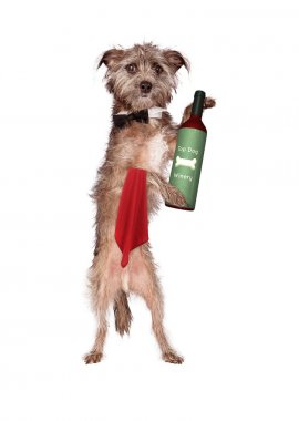 Dog Waiter With Wine