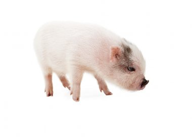 Pink Piglet Side View
