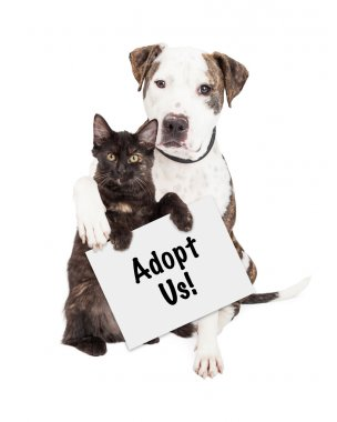 Dog and Kitten with Adopt Sign