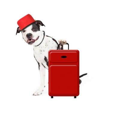 Dog Bellhop With Suitcase