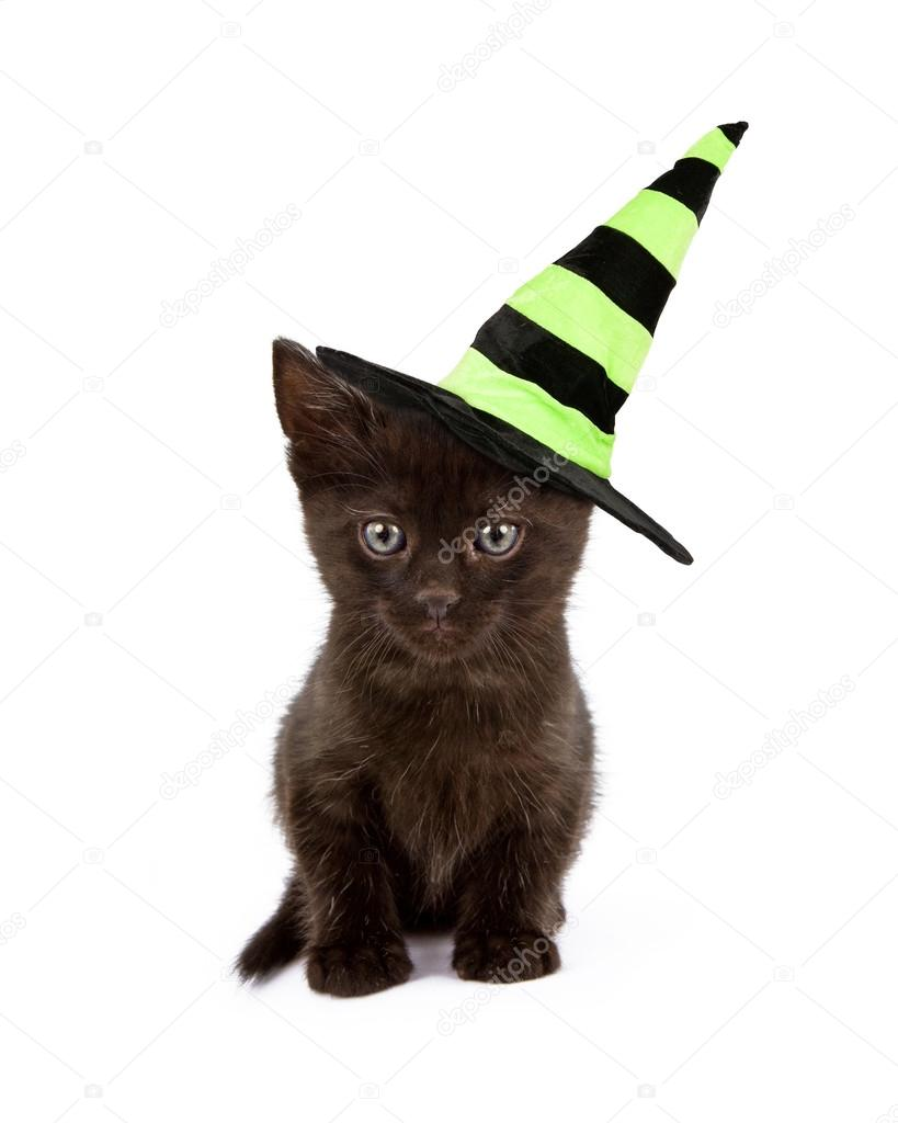 82c867ca Cute black kitten wearing a green and black Halloween witch hat isolated on  white background — Photo by ...
