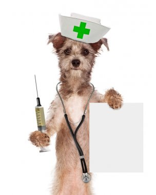 Dog nurse with syringe