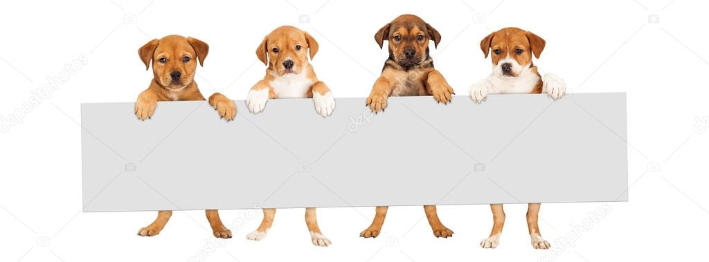 Puppies holding blank sign