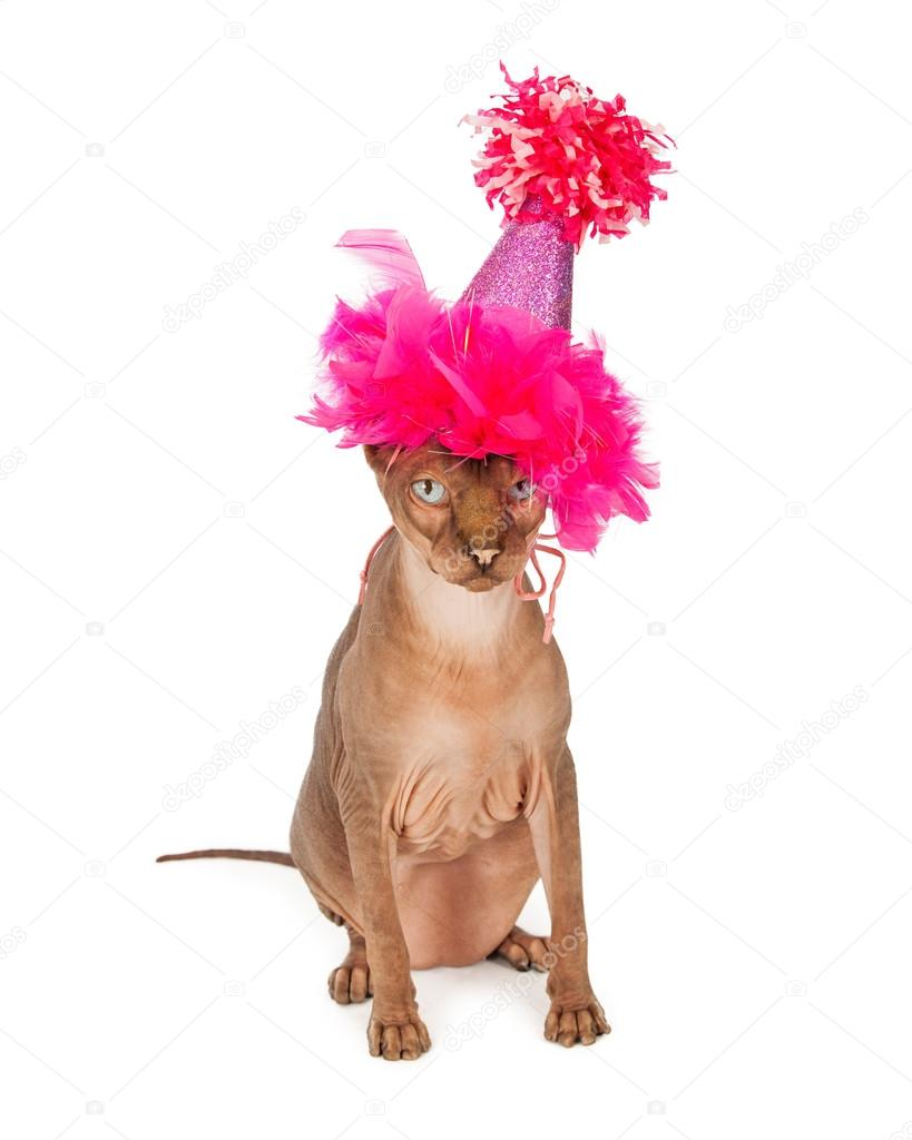 Cat Wearing Birthday Hat Stock Image