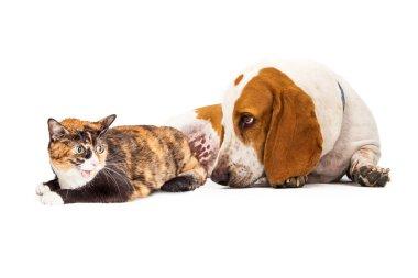 Basset Hound Dog And Mad Cat