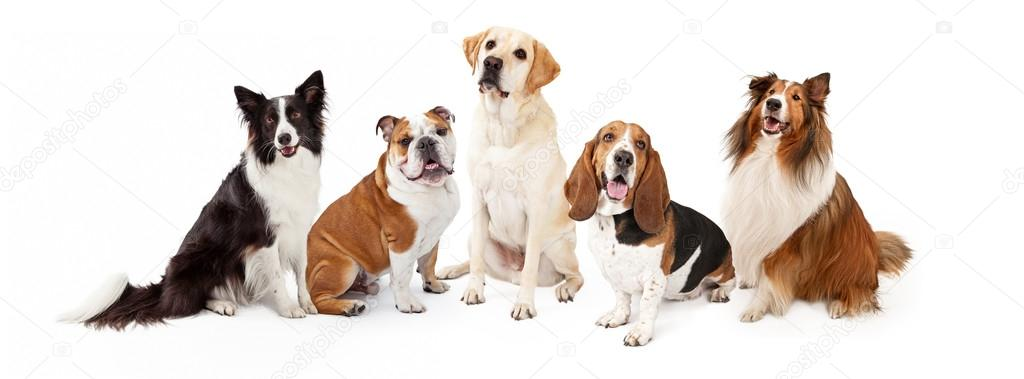 Common Family Dogs Breeds Group