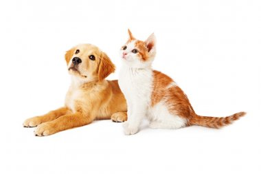 Puppy and Kitten Looking to Side