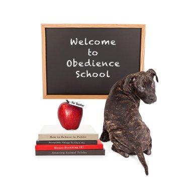 Puppy Attending Obedience School