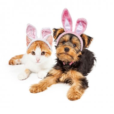 Easter Bunny  Puppy and Kitten