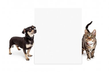 Dog and Cat Looking Up at Tall Blank Sign