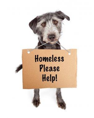 Dog with Cardboard Please Help Sign