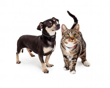 Small Dog and Cat Looking Up