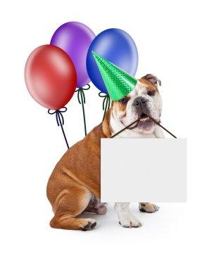 Bulldog puppy in birthday party hat