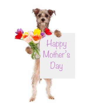 Dog holding tulip flowers