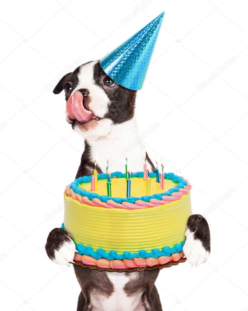 Birthday Puppy Holding Cake Stock Photo Adogslifephoto 73864379