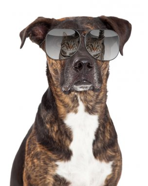 Dog with reflection of cat in sunglasses