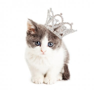 Cute kitten wearing princess crown