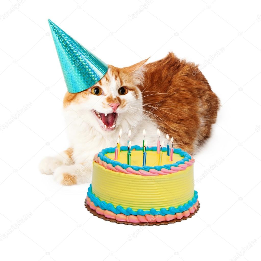 Grappige Gekke Verjaardag Kat Met Cake Stockfoto Adogslifephoto