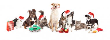 Christmas  group of cats and dogs
