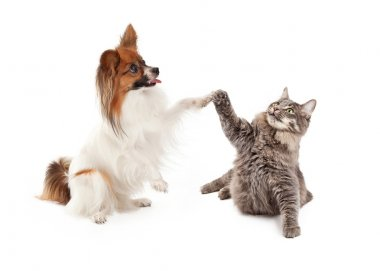 dog and cat raising paws to high five