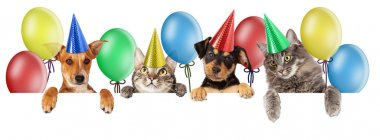 Birthday group of cats and dogs