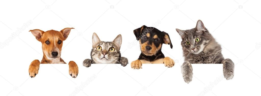 cats and dogs hanging paws over white banner