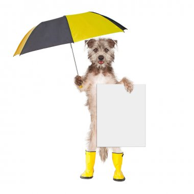 dog in rain boots holding umbrella and blank sign