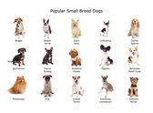 Sammlung beliebter Hunde kleiner Rassen