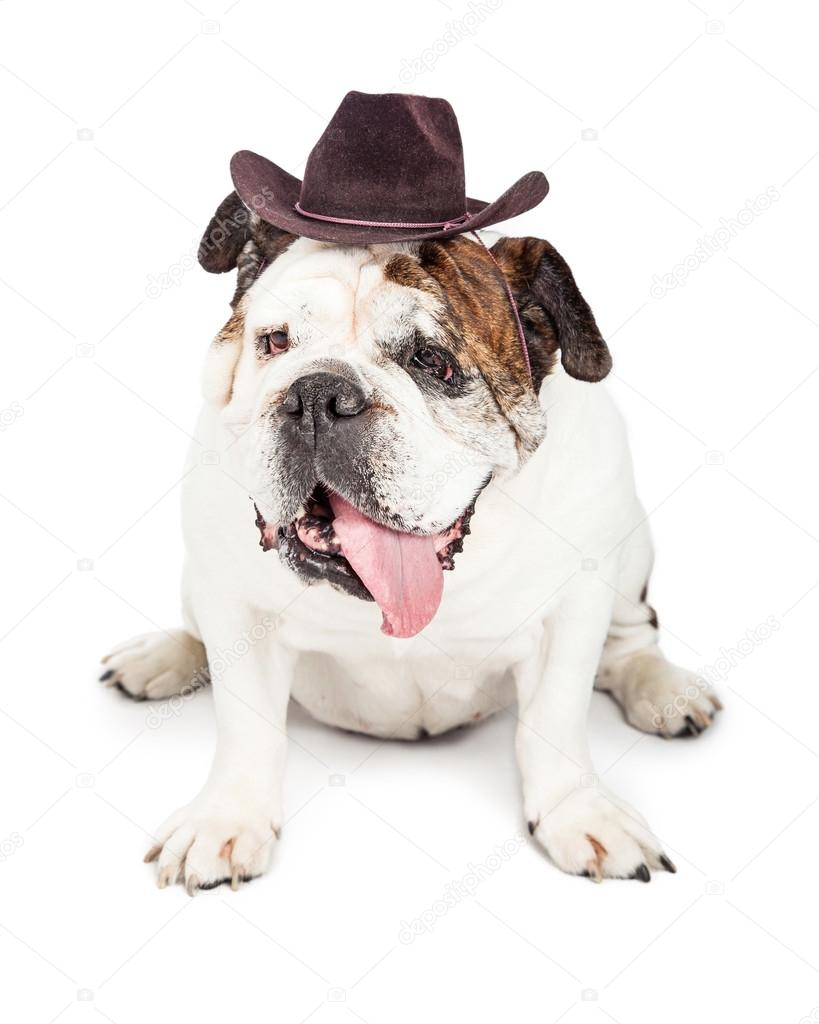 Bulldog Dog Wearing Cowboy Hat Stock Photo Adogslifephoto 76096291