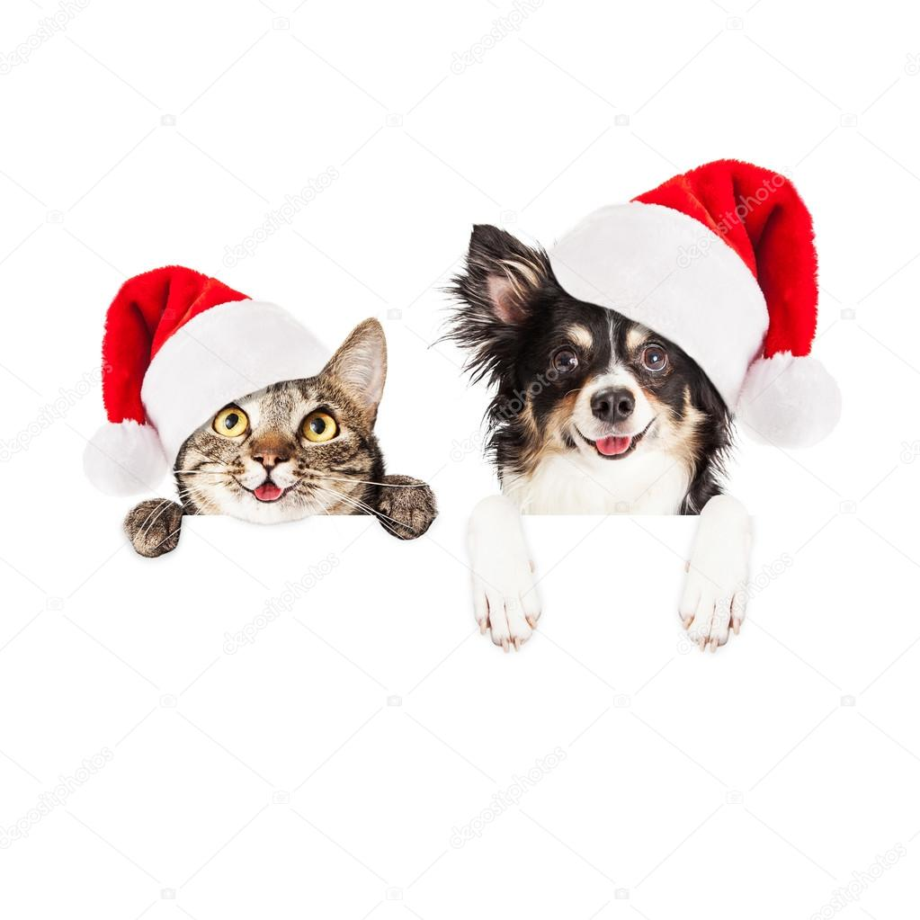 Christmas cat and dog with blank sign