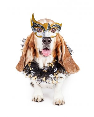 Funny Mardi Gras Dog