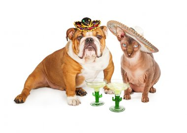 Mexican Hairless Cat and Bulldog