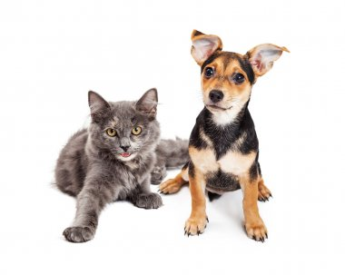 Cute Kitten and Crossbreed Puppy