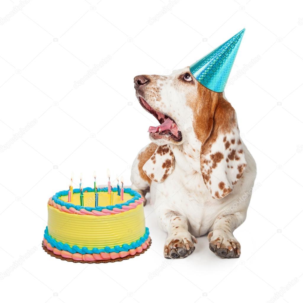 Astounding Images Hound Dog Birthday Basset Hound Dog With Birthday Cake Personalised Birthday Cards Paralily Jamesorg
