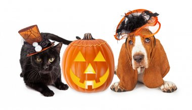 Halloween Cat and Dog in Funny Hats