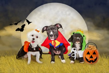 Halloween Dogs in a Field with Moon